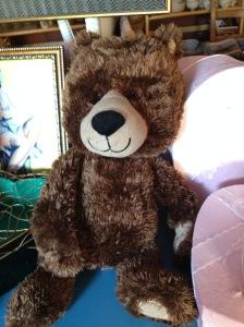 Teddy - Brown 2