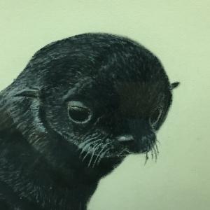 Art - Baby Seal 2