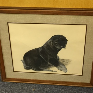 Art - Baby Seal